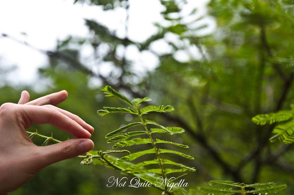 xiahuangbanna tropical botanical garden-2