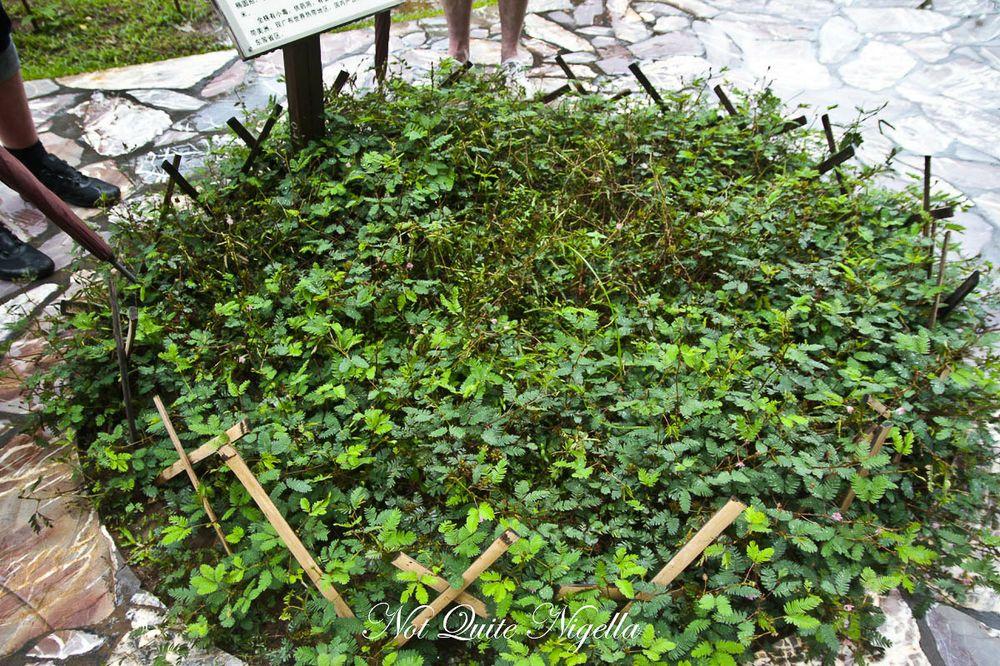 xiahuangbanna tropical botanical garden-3