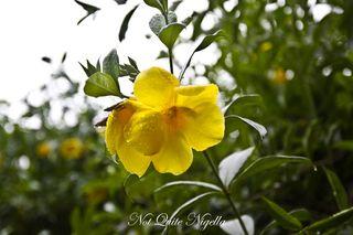 xiahuangbanna tropical botanical garden-4
