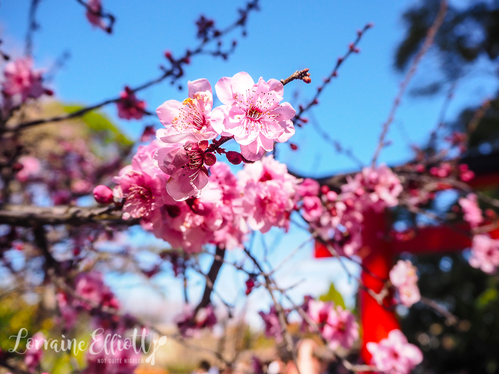 Sydney Auburn Cherry Blossom Festival Not Quite Nigella,Wall Stickers For Bedroom Amazon