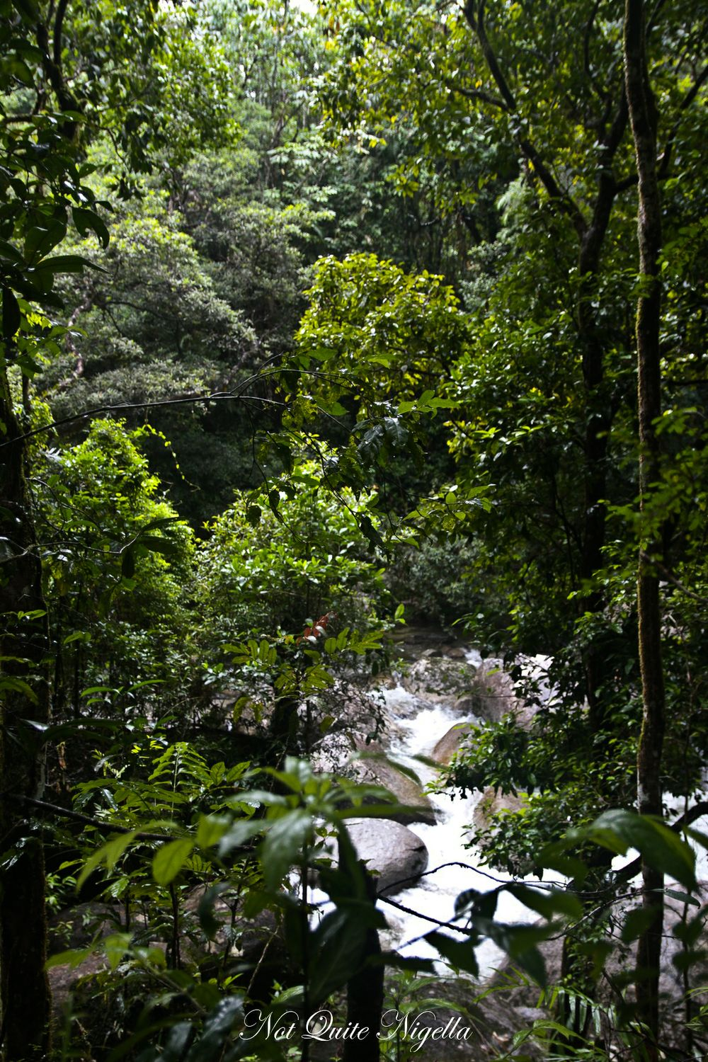 cairns food mossman gorge walk-11