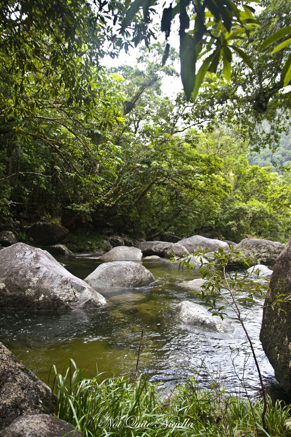 cairns food mossman gorge walk-13