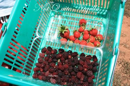 huntley berry berry haul