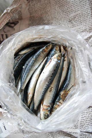 fresh-sardines-3-2