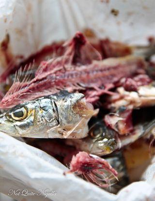 sardine-bones-2