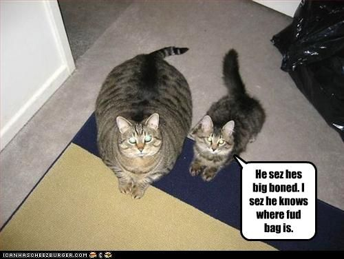 funny-pictures-one-cat-is-big-boned