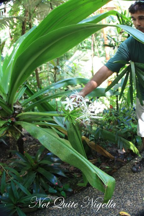 daintree forest eco lodge