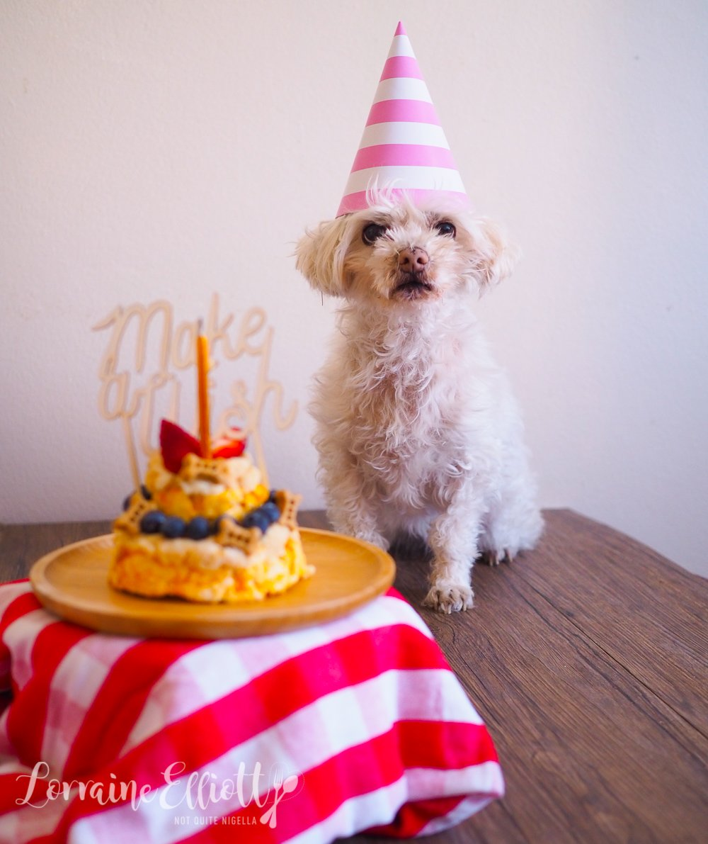 Giving Pet Dog A Birthday Cake