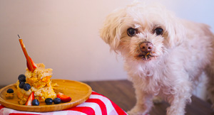 A Pawsome {and Easy!} Dog Birthday Cake!