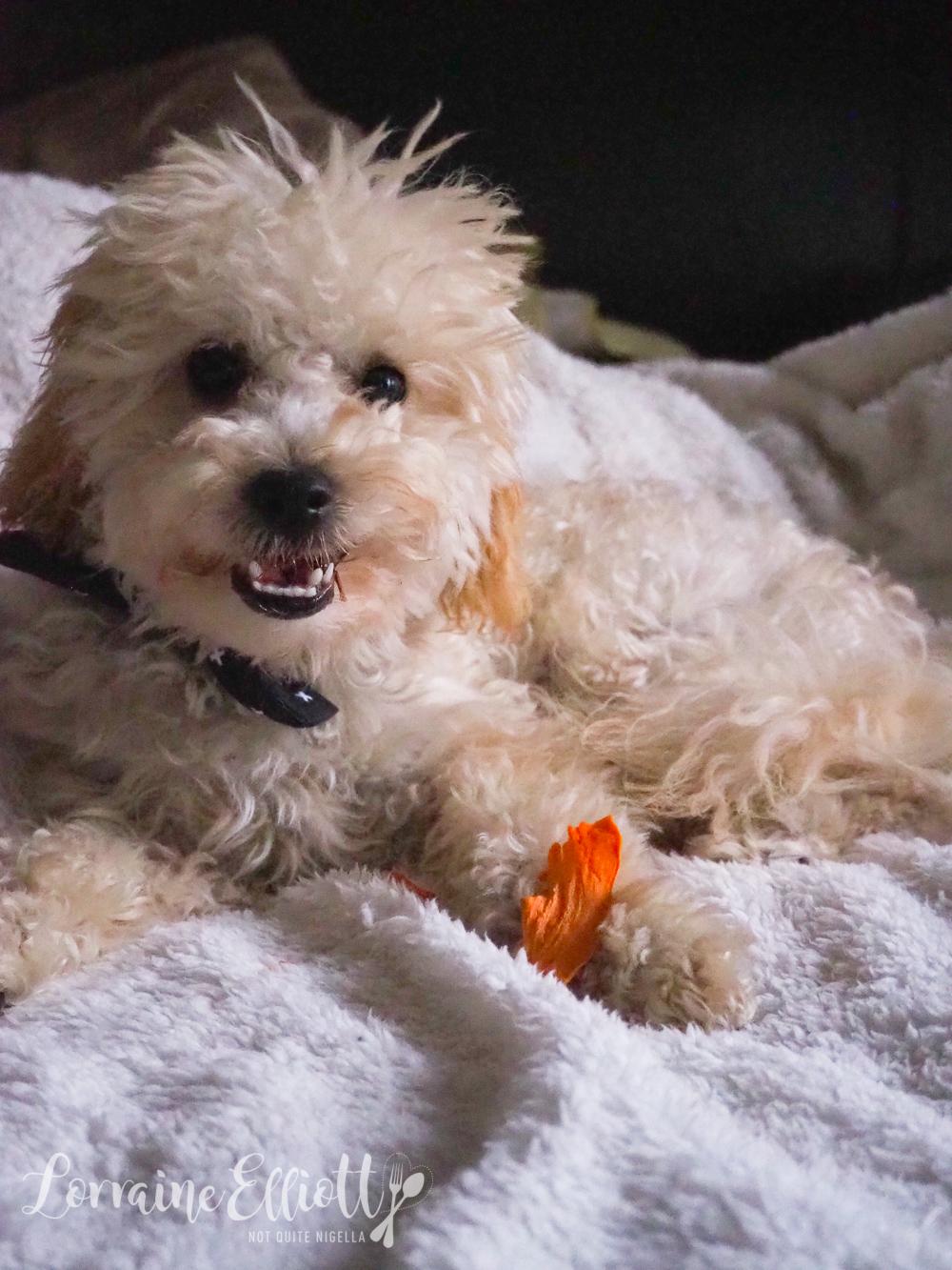 Dog Treats Sweet Potato No Additives