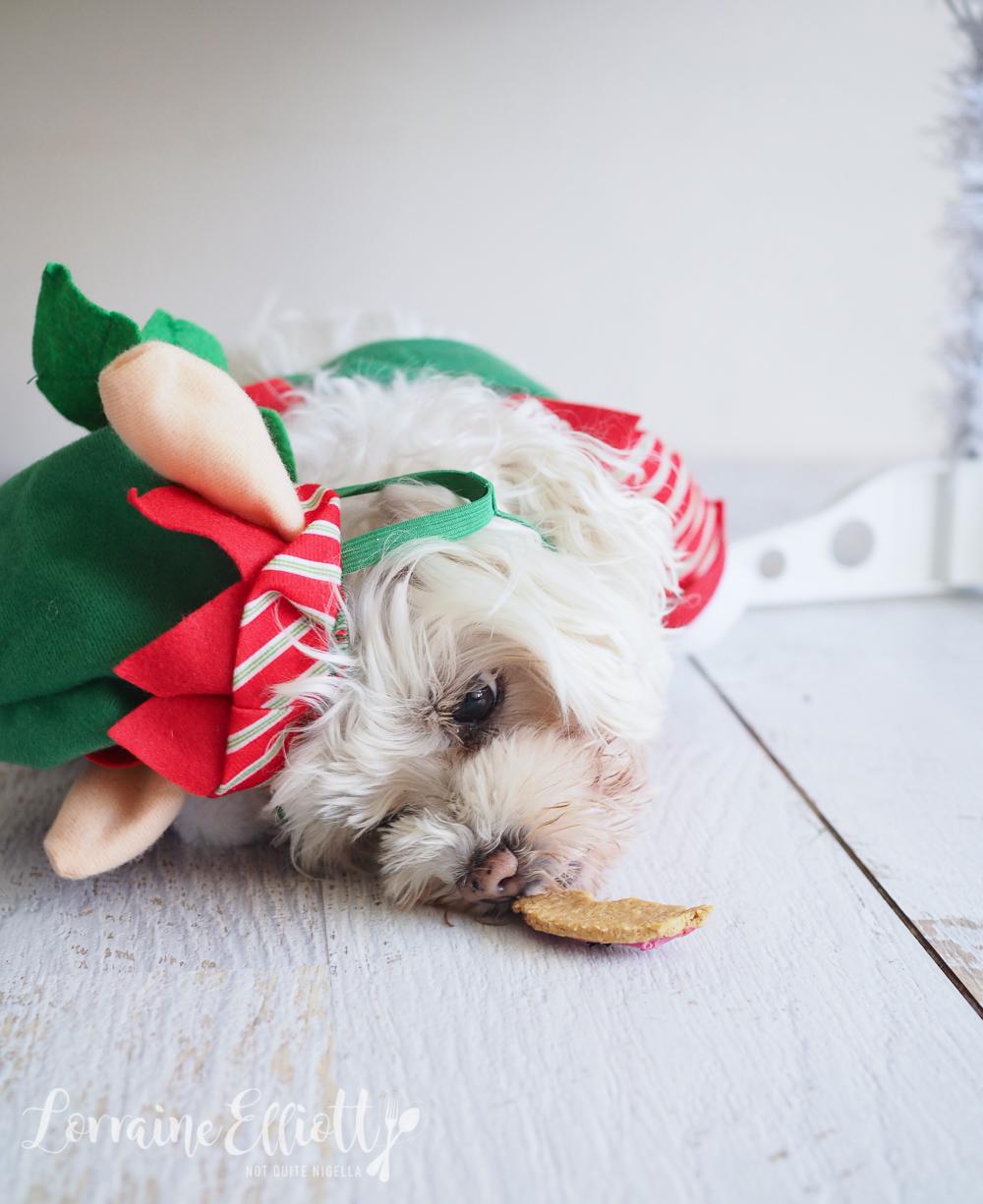 Dog Biscuit Domut Recipe