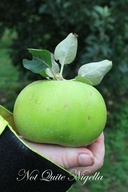 farmgate bilpin apple
