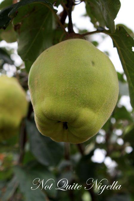 farmgate bilpin quince