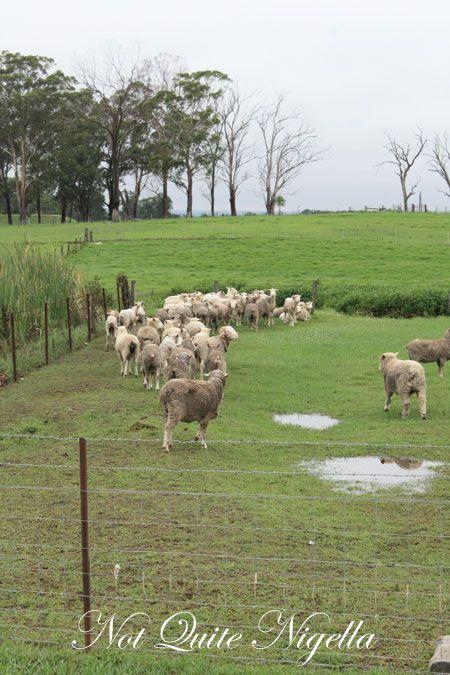 farmgate m&abutchers paddock