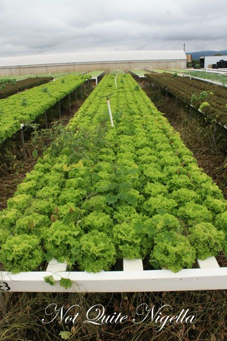 farmgate riverview lettuce