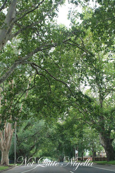 farmgate trees