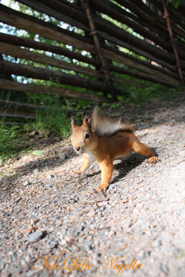 Seurasaari squirrel