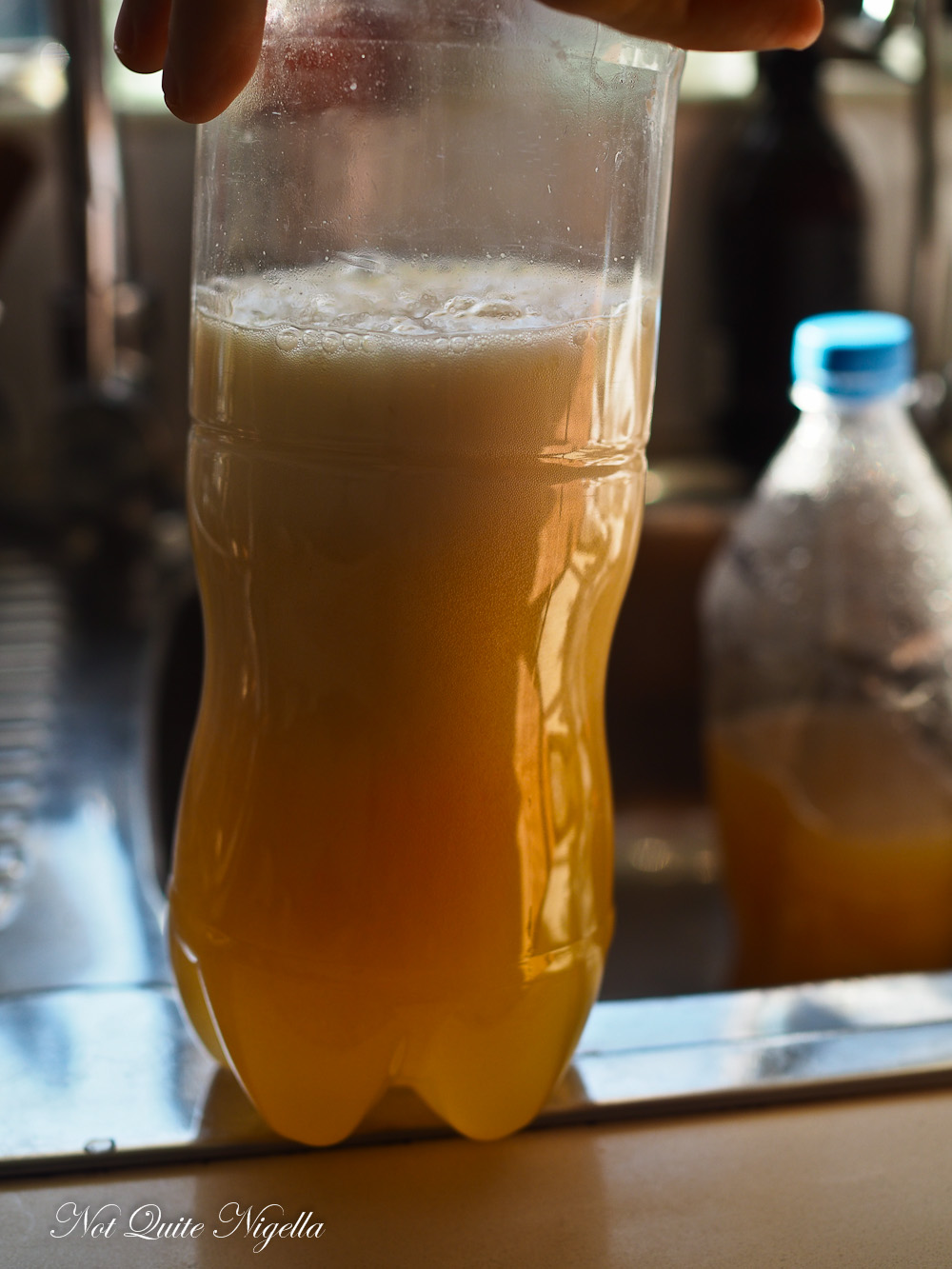 Ginger Chilli Beer Home Brewed Fermented