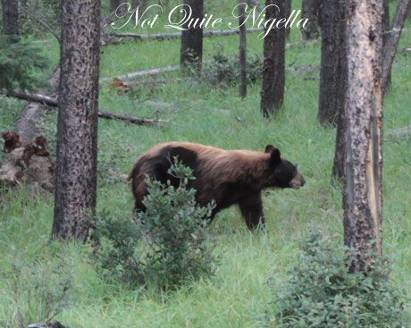 The Wild Side of Jasper, Canada
