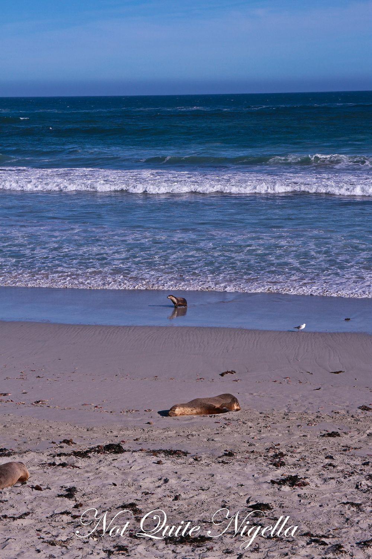 Exploring Kangaroo Island, South Australia