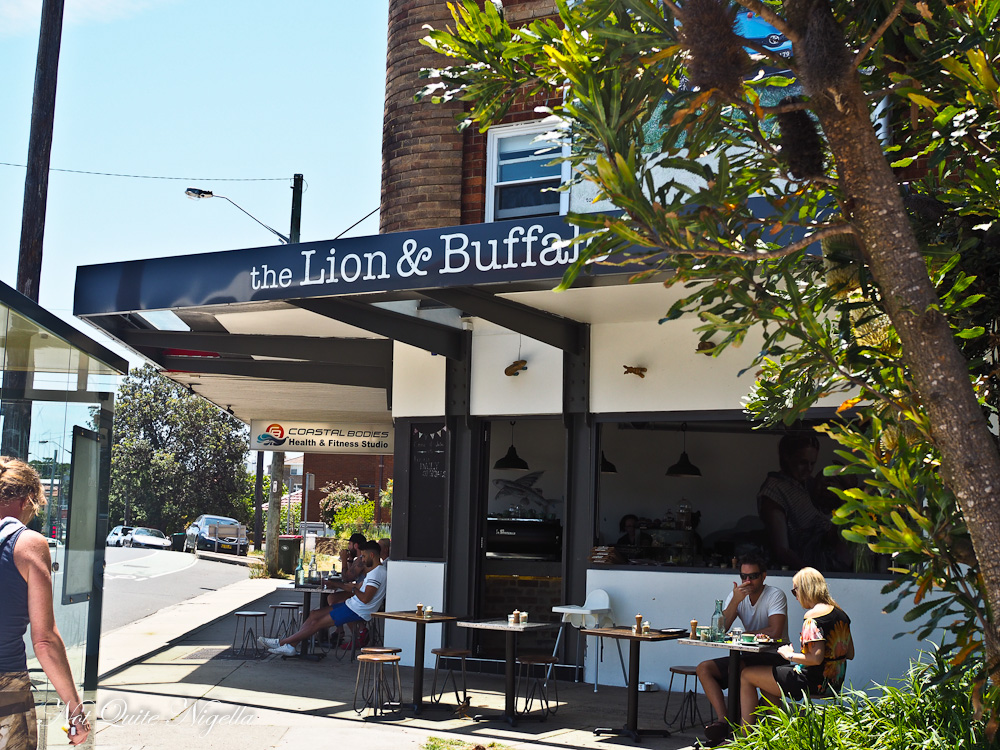 Lion Buffalo Coogee