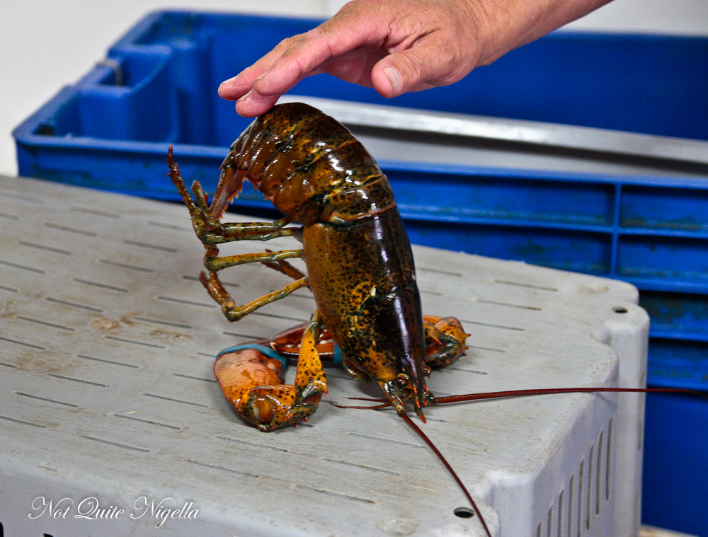 Lobster Nova Scotia