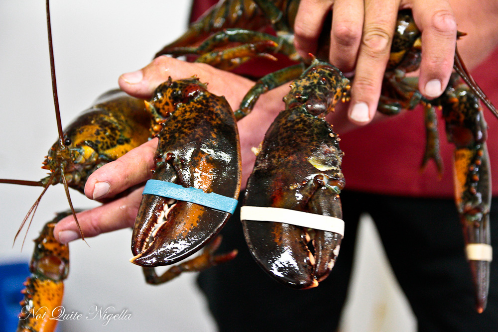 Lobster Nova Scotia