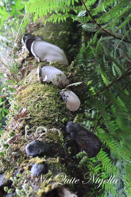 treetops maori trail 26