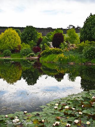 Mayfield Garden Oberon Blue Mountains Not Quite Nigella