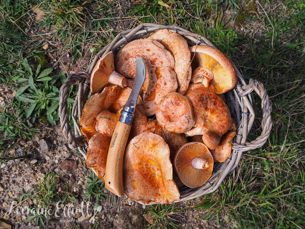 Mushroom Picking in Oberon Diego Bonetto