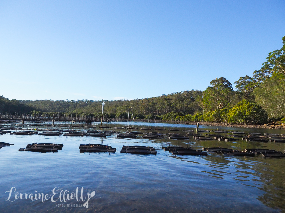 Oysters Seafood South Coast NSW