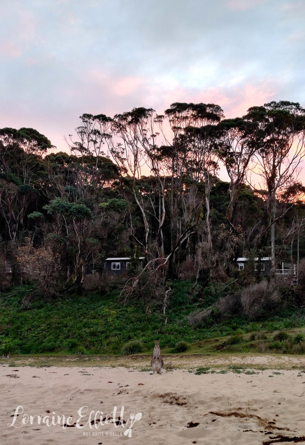 Pebbly Beach Escape, South Coast NSW