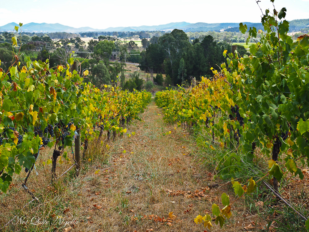 Pizzini Wines King Valley
