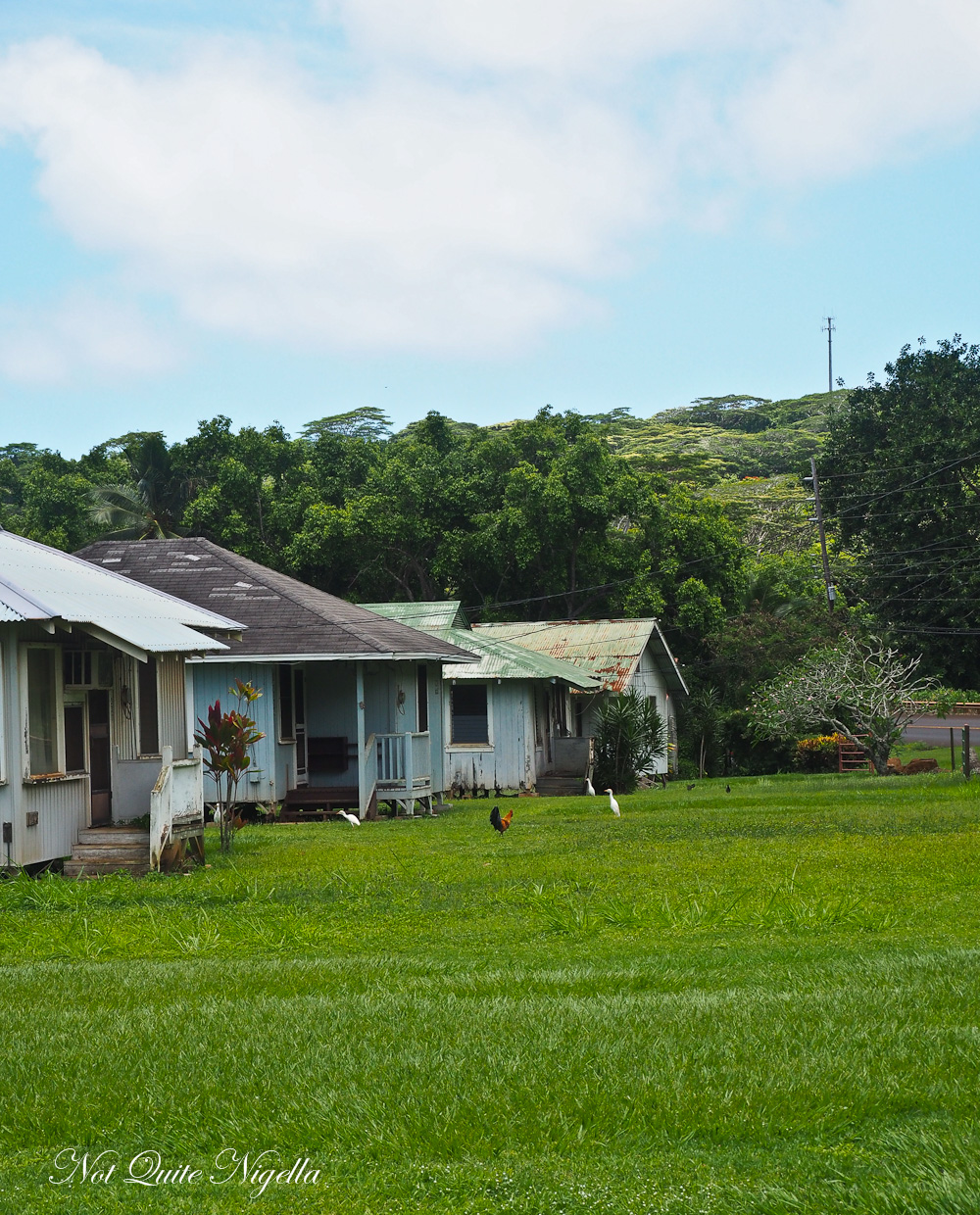 princeville chat The princeville ranch is certainly one of the most beautiful of any in the whole  state of  use our chat, videos, and maps to find the best of hawaii's activities.