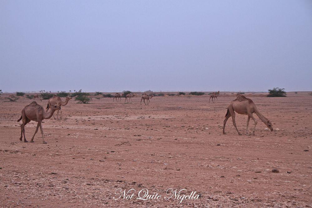Surprising Salalah, Oman