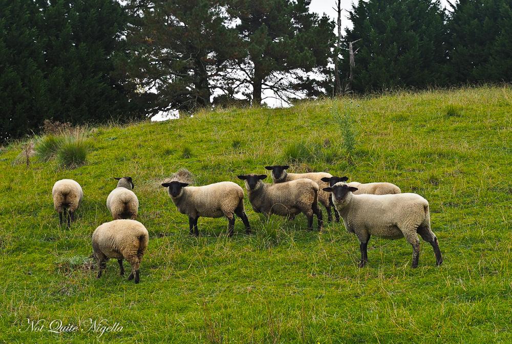 Southern Highlands Getaway