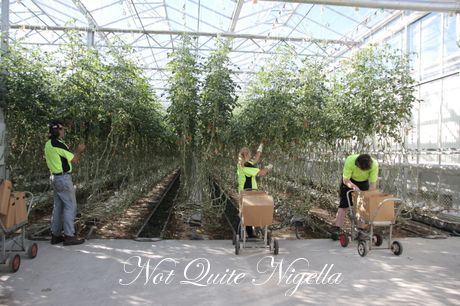tasmania producers
