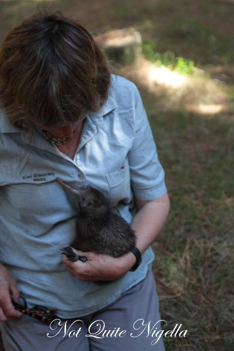 kiwi bird discovery tour