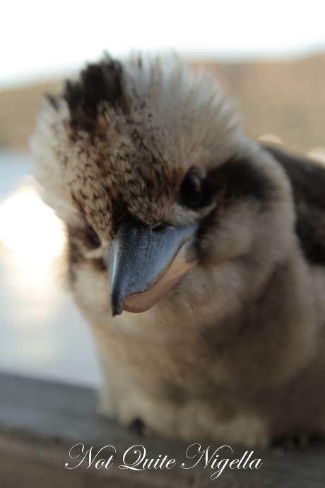 the fat goose, dangar island