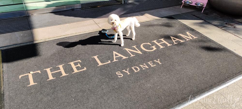 The Langham Sydney Pampered Pets Program