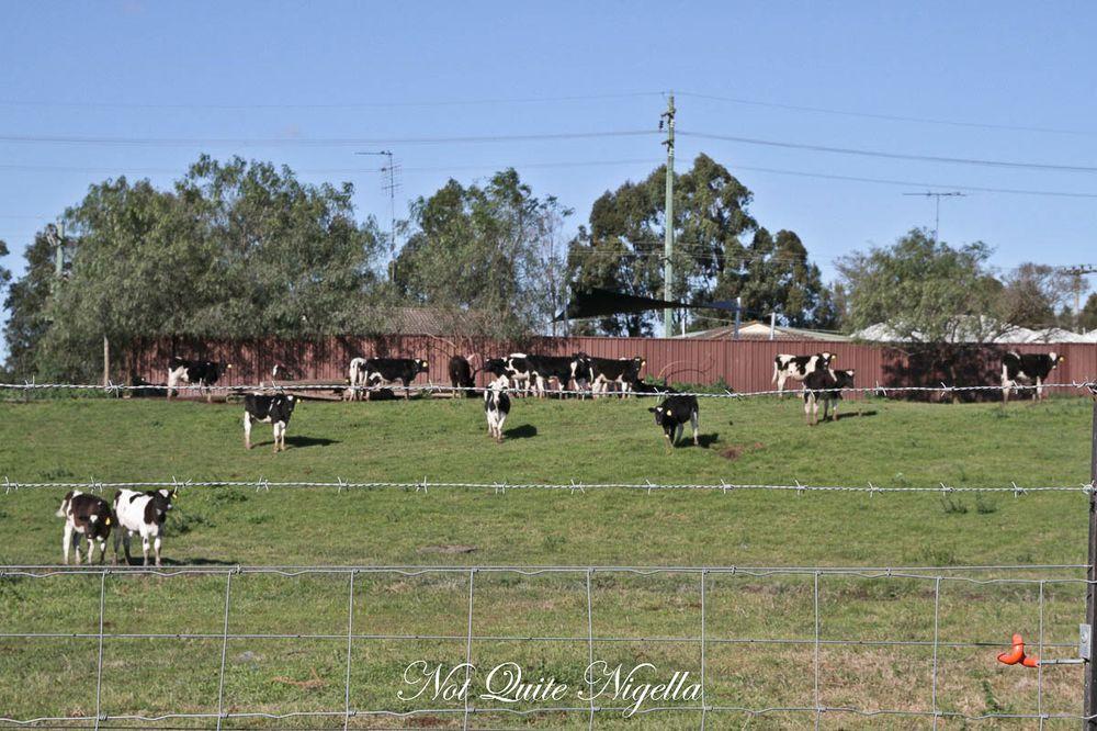 emu plains prison-1