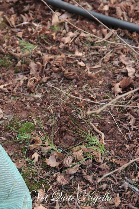 truffle hunt chateau yering
