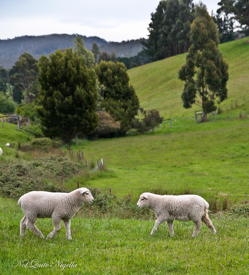 Ultimate Tasmanian Food Tour