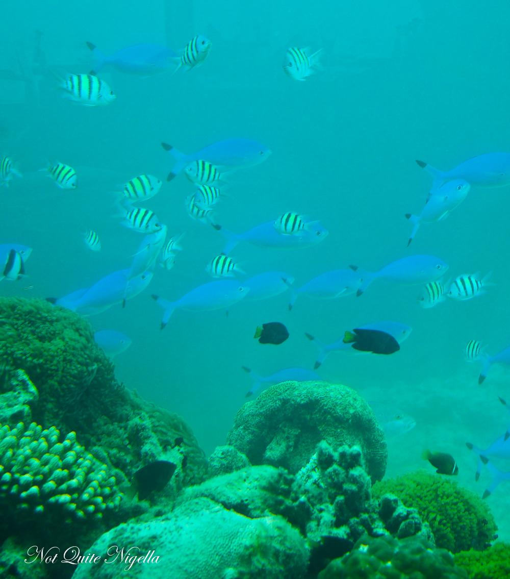 Underwater Sea restaurant Anantara Kihavah Maldives