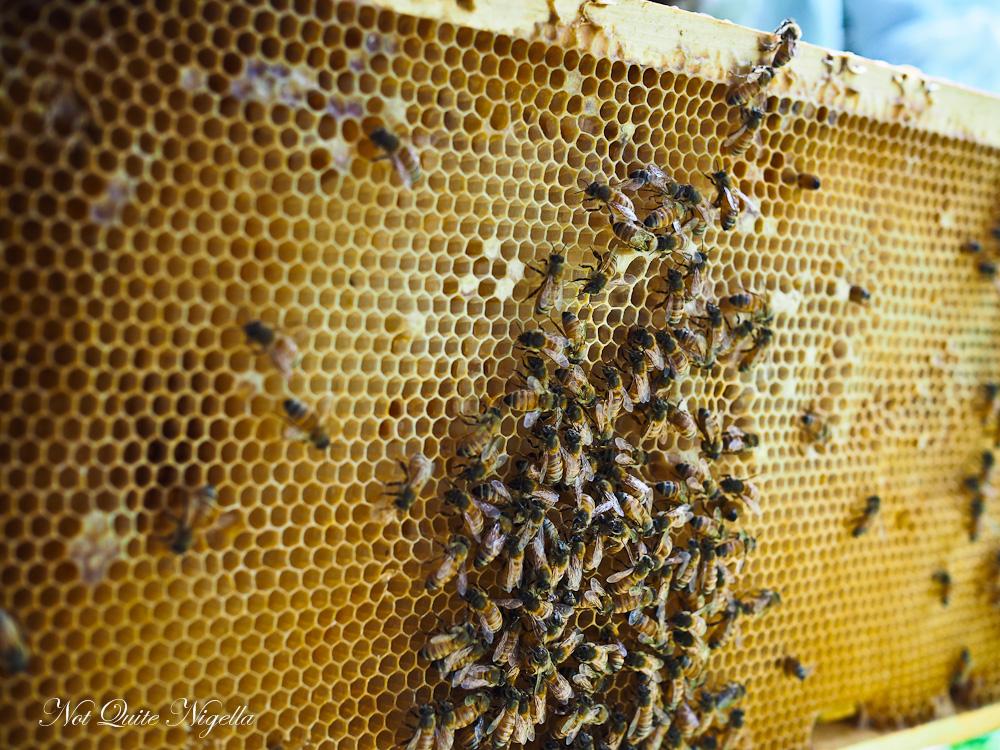 The Urban Beehive Beekeeping