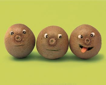 Three wise kiwifruit