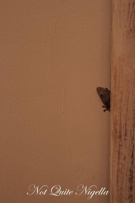 Balinese gecko