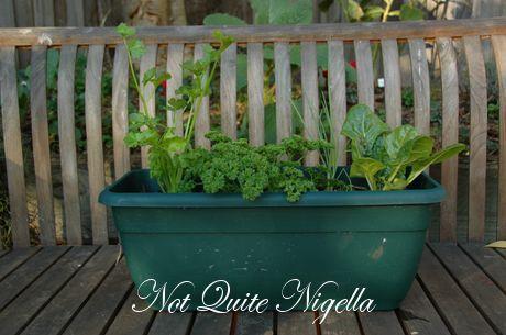 Win an Organic Veggie Garden Workshop For Two!